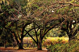 Jungle Gardens at Avery Island, Louisiana