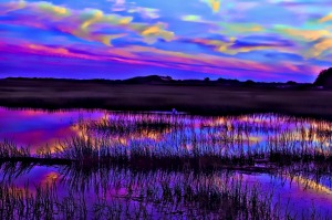 The Salt Marsh, Provincetown, Massachusetts
