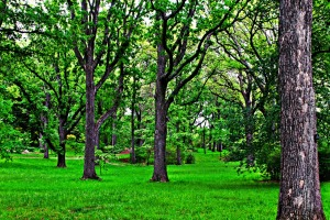 Forest for the Trees, Arnold Arboretum, Boston