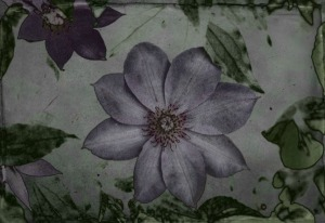 The Pink Clematis, Stencil Drawing Effect