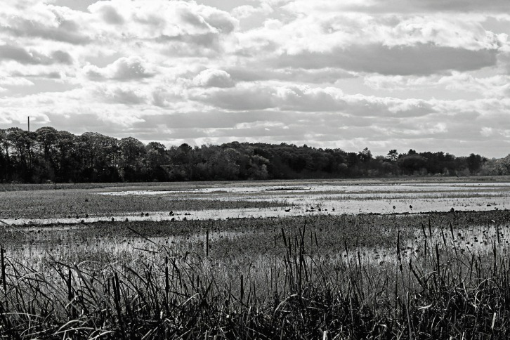 Dusk at Great Meadows-Detail B&W