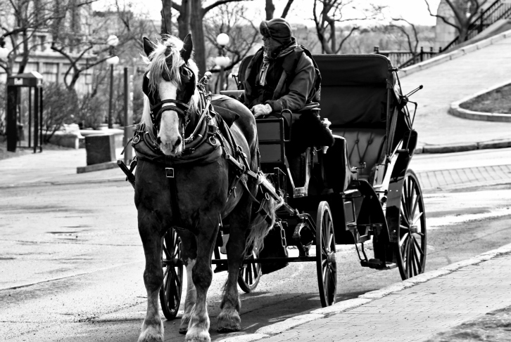 Horse & Buggy, Old Quebec
