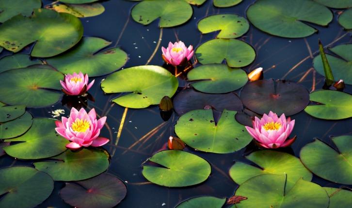 Water Lilies-2-hdri